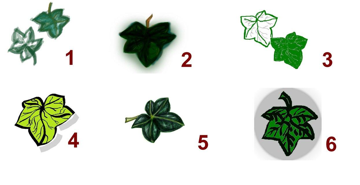 Drawn ivy ivy leaf Ivy Leaf Tattoobite Drawing Ivy