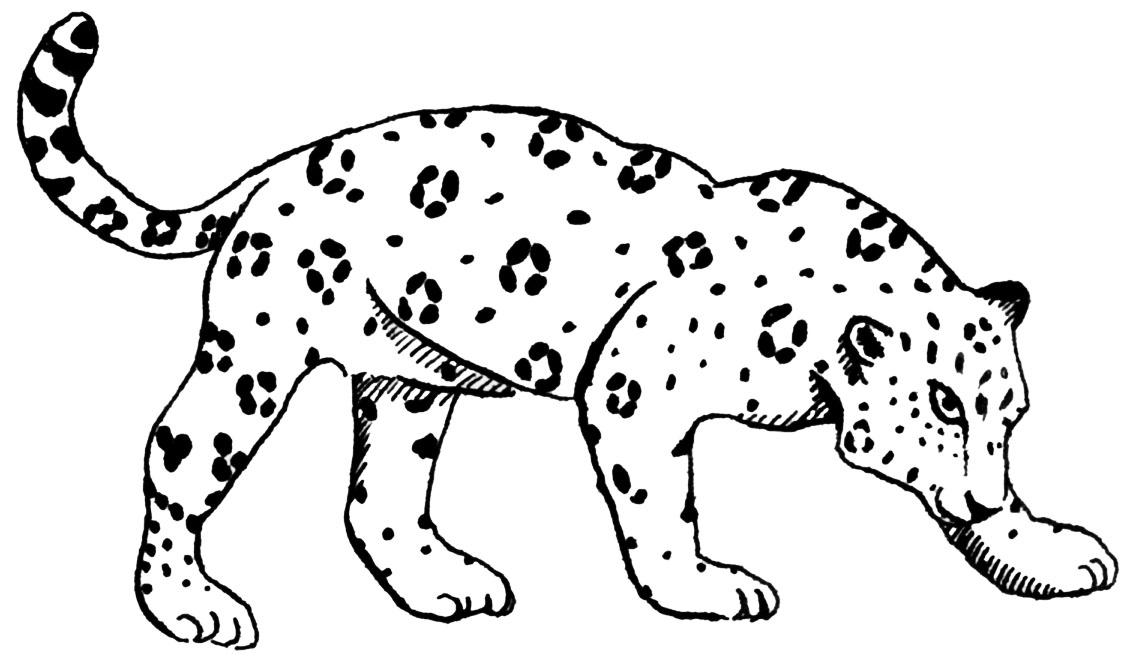 Drawn jaguar #8