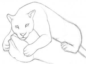 Drawn jaguar #4