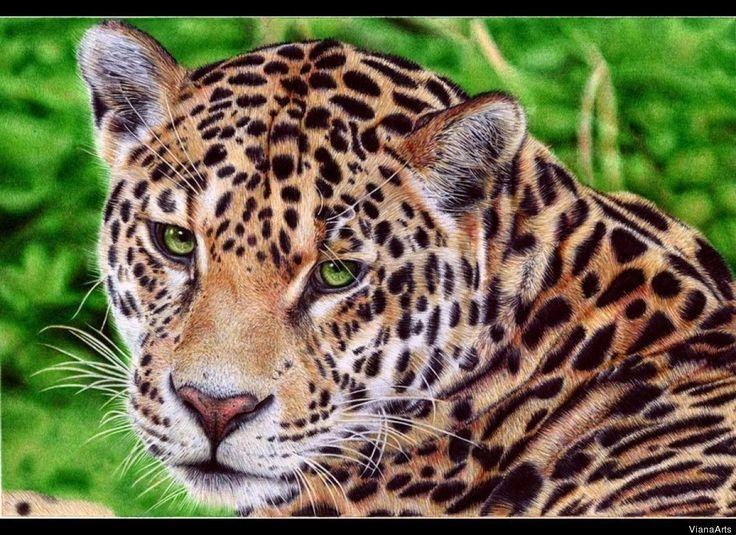 Drawn jaguar carnivore Images 128 JAGUARS