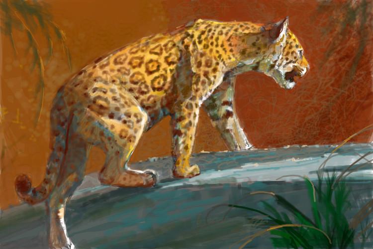 Drawn jaguar carnivore The Jaguar out an inside
