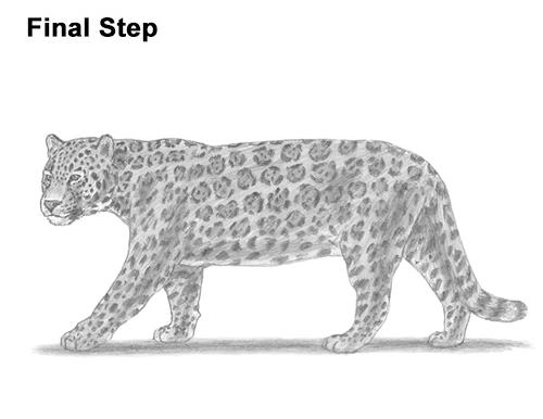 Drawn jaguar cougar Big to Draw How a