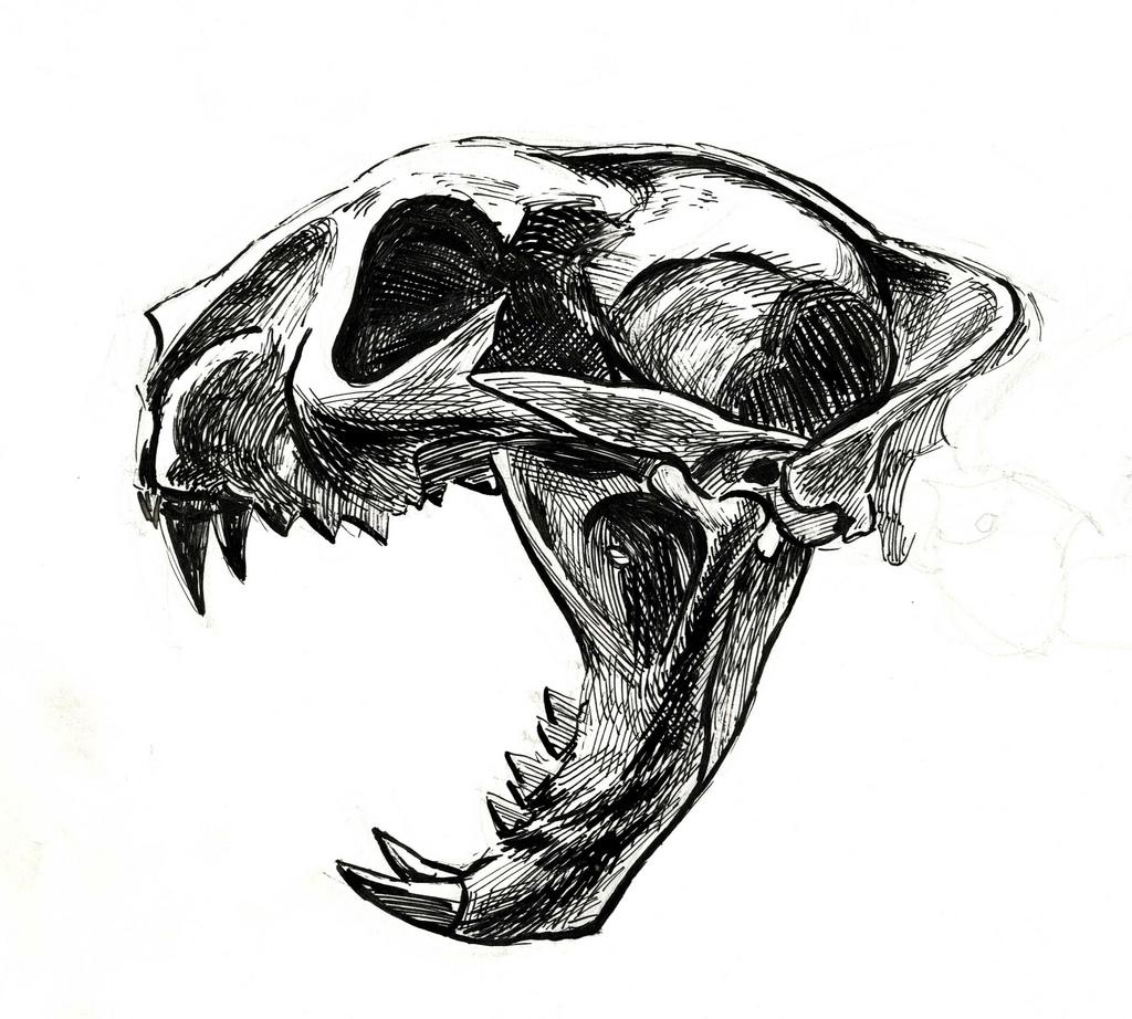Drawn jaguar cougar Cougar Search image Google Cougar