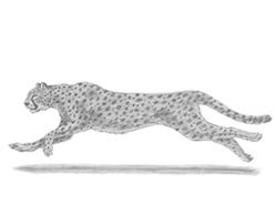 Drawn jaguar cougar To Cheetah  a Home