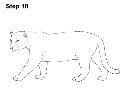 Drawn jaguar easy Draw How a Draw Big