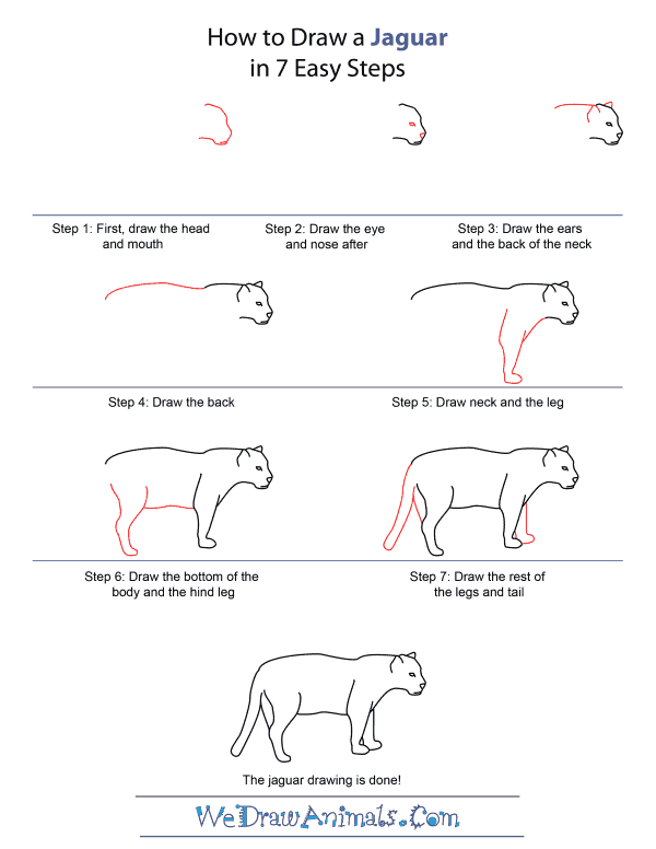 Drawn jaguar easy By Quick Step How Jaguar