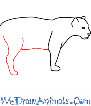 Drawn jaguar easy A Print How Draw To