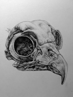 Drawn jaguar skull 9 Drawing:  Skull on