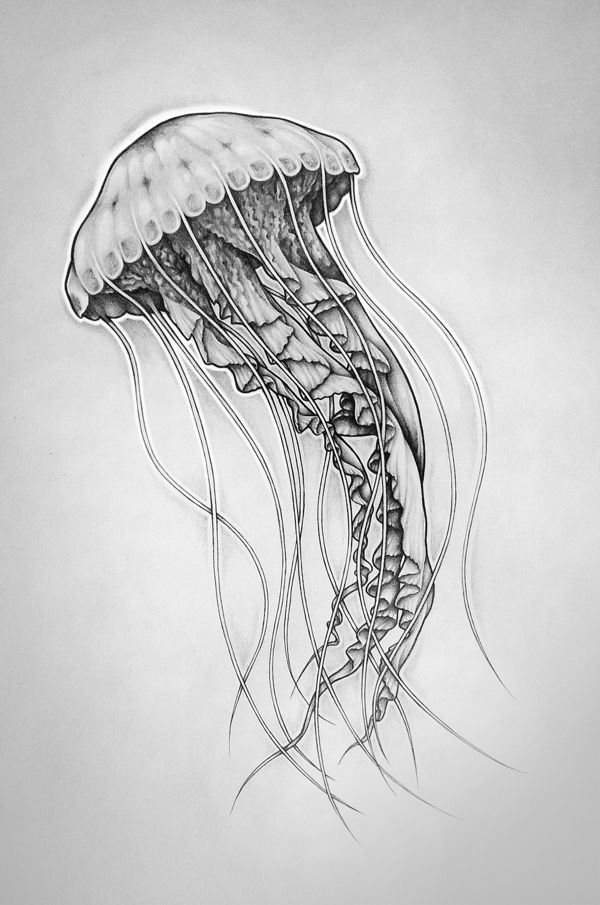 Drawn jellies #2