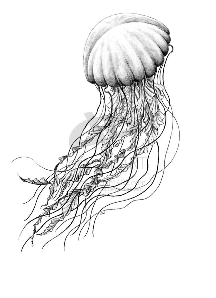 Drawn jellies #6