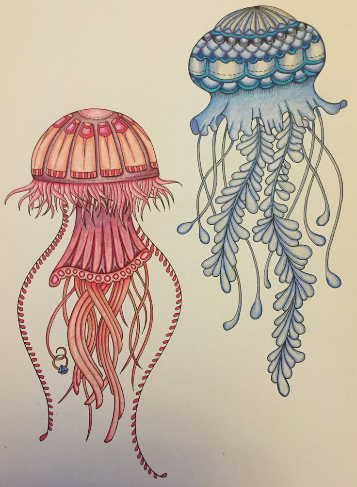 Drawn jellyfish little fish Of couple jellyfish Best release