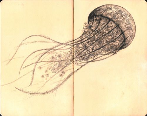 Drawn jellies felted On more Jellyfish Find Jellyfish