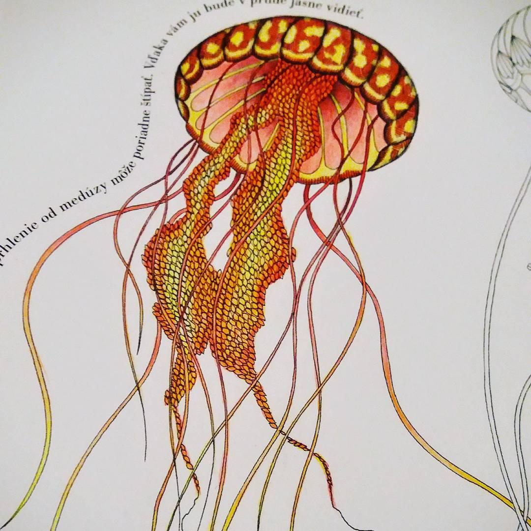 Drawn jellies millie marotta Marotta Kingdom  #drawing Animal