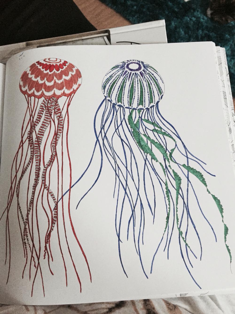 Drawn jellies millie marotta From Kingdom Jellyfish Animal Adult