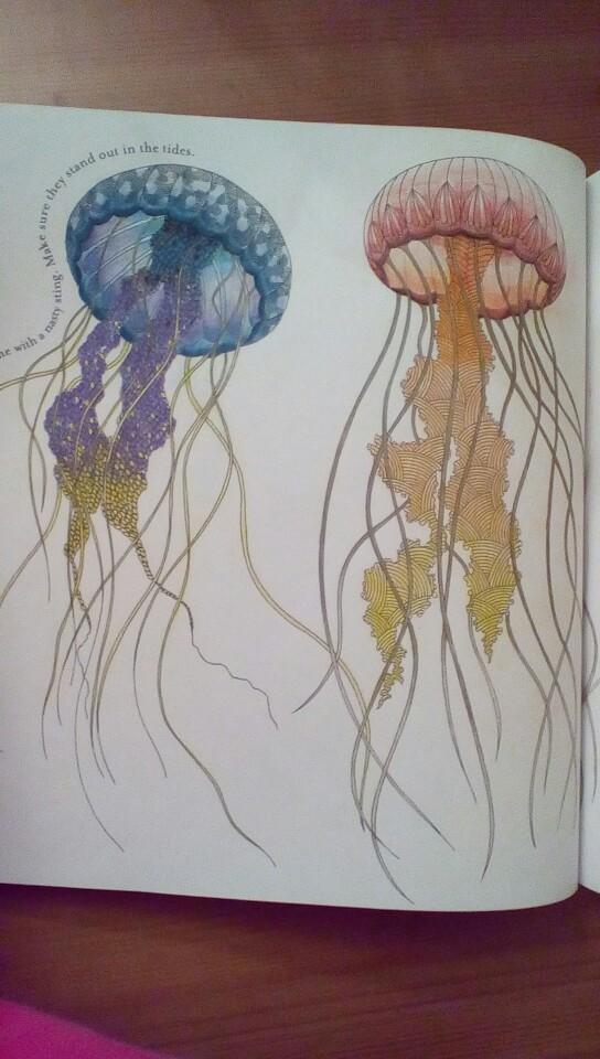 Drawn jellies millie marotta Marotta's Kingdom Marotta's Animal