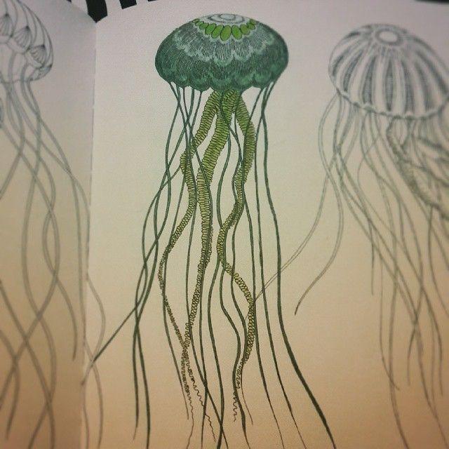 Drawn jellies millie marotta Pinterest //jellyfish images on #millie