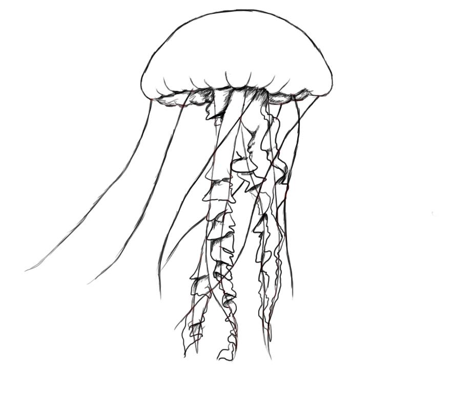 Drawn jellyfish Draw How  A Fish