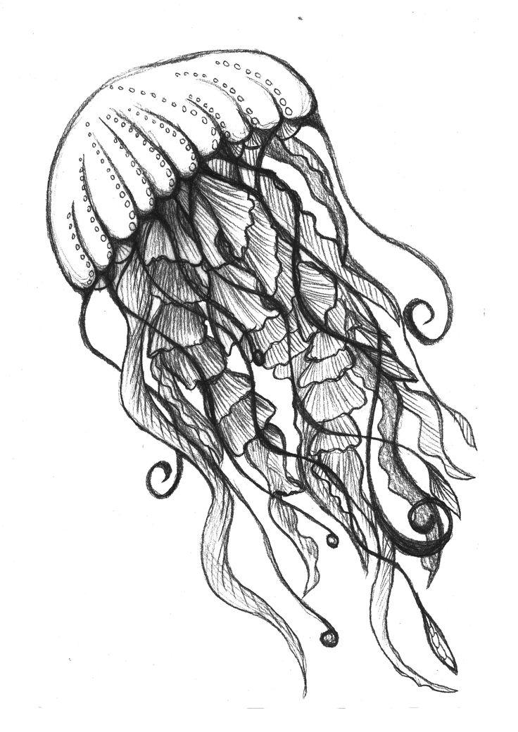 Drawn jellyfish The ideas best drawing jellyfish