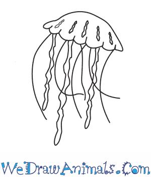 Drawn jellyfish How  a Draw Jellyfish