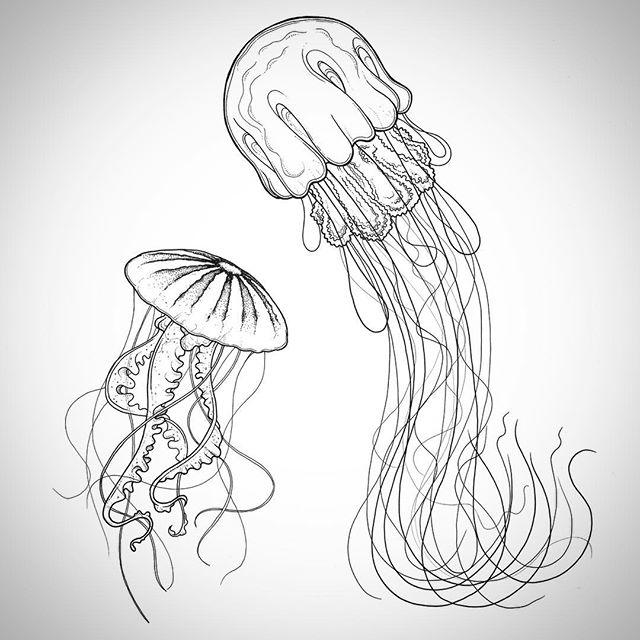 Drawn jellyfish Images Drawing Jellyfish Art Drawing