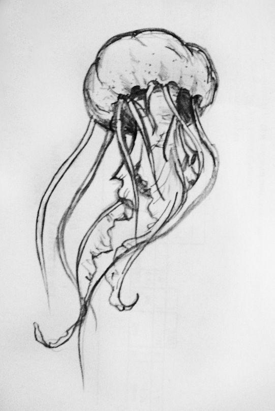 Drawn jellyfish Jellyfish ideas by jellyfish DeviantArt