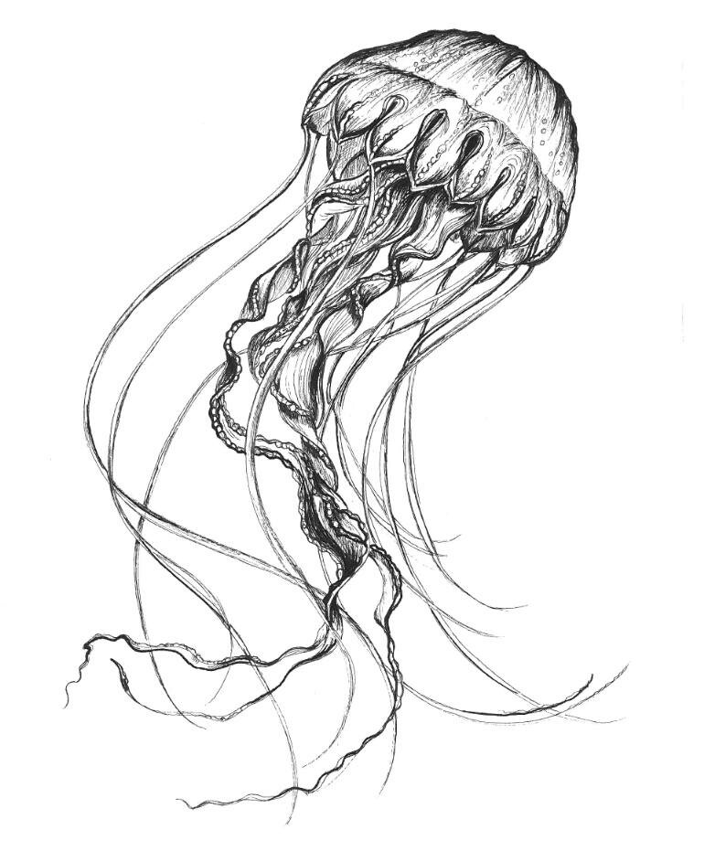 Drawn tentacle vector Drawing sketch illustration Jellies delicate