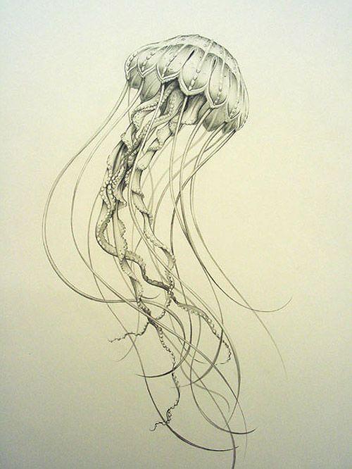 Drawn jellyfish Jellyfish ideas 2005 Jellyfish tiffanybozic