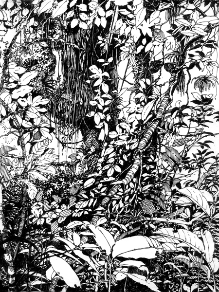 Drawn jungle The the feeds For The