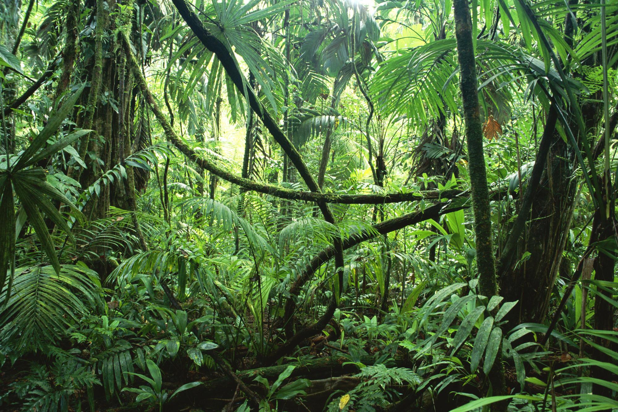 Drawn jungle The  Jungle in Beast