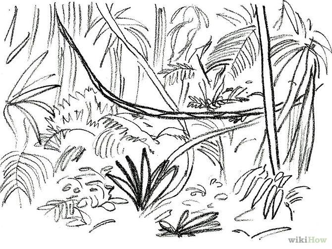 Drawn jungle Plants Designs Tattoo Jungle/rainforest drawing