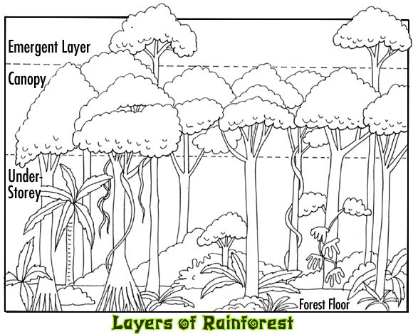 Drawn rainforest simple Pinterest Jungle Inspired Art Ideas