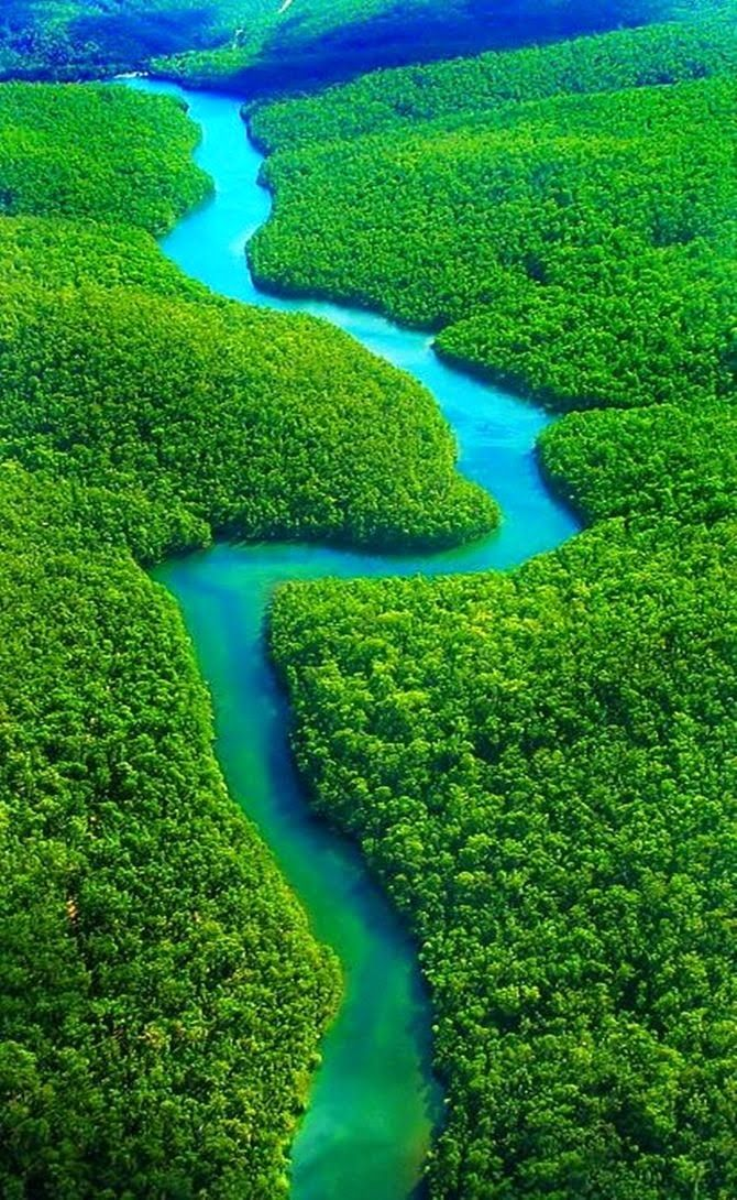 Drawn rainforest forest river Brazil on 25+ Forests Worlds