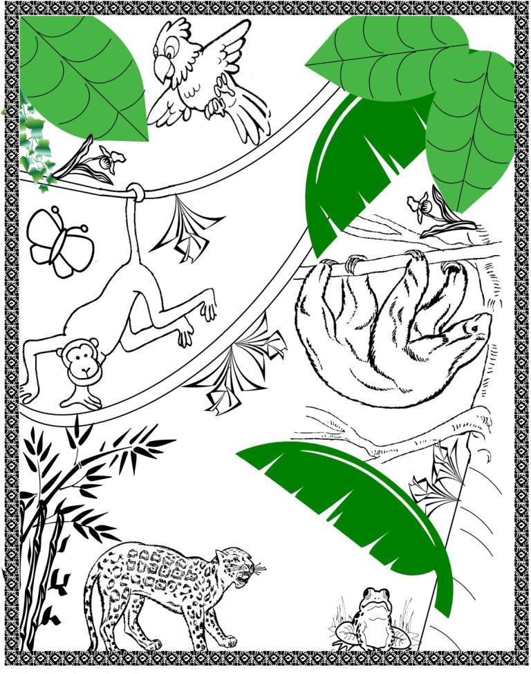 Drawn rainforest tropical forest  Rain Amazon Forest