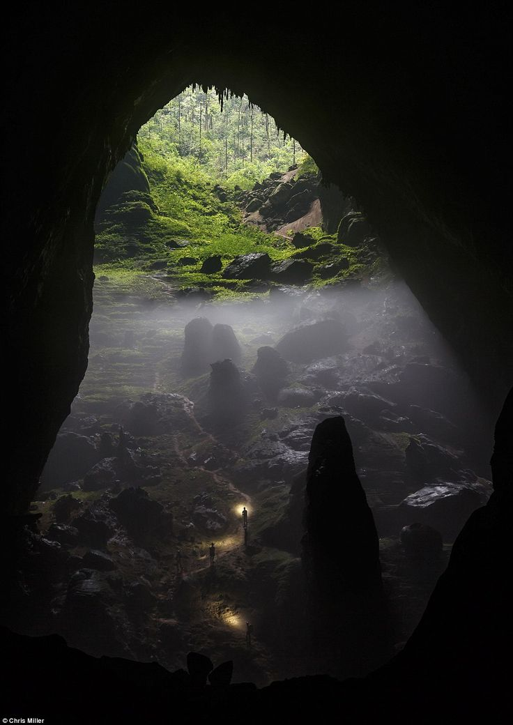 Drawn jungle deep Light 66 revealed! Pinterest images