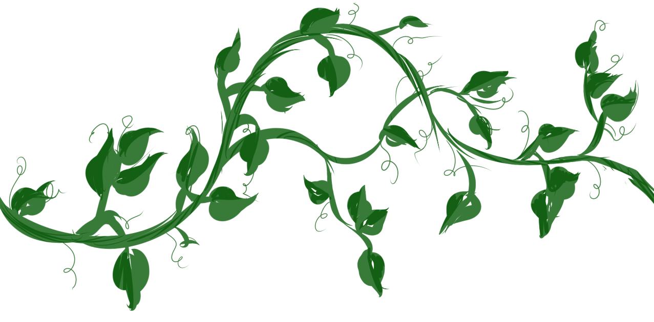 Drawn plant jungle vine Vines vine maple with Google