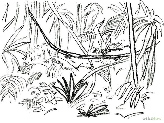 Drawn rainforest tropic 22 Designs plants Jungle/rainforest on
