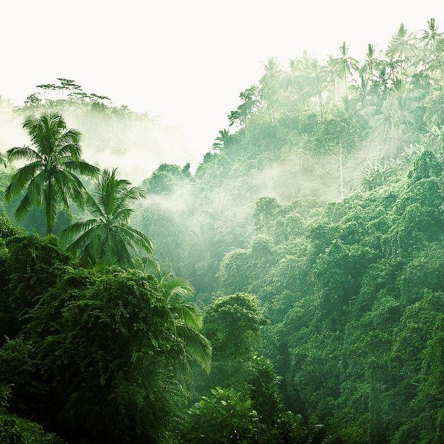 Drawn rainforest forest river By Pinterest 25+ Best via