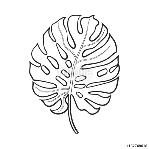 Drawn jungle leave vine Sketch fresh monstera background illustration