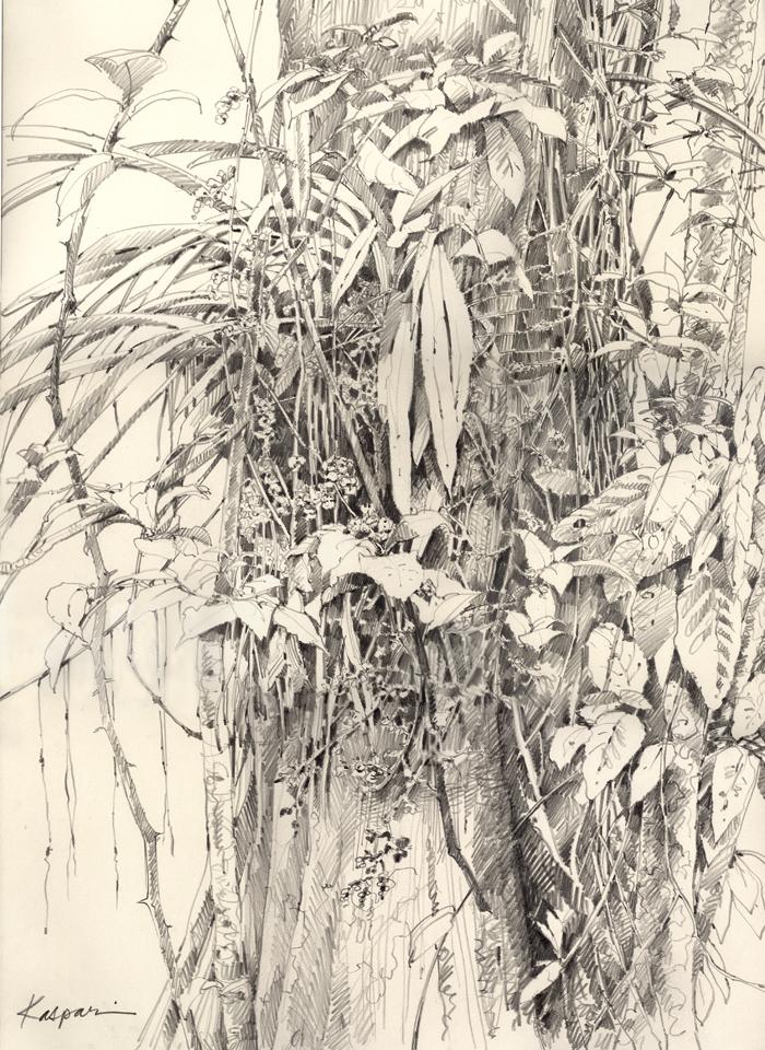 Drawn rainforest jungle Trees plein The – is
