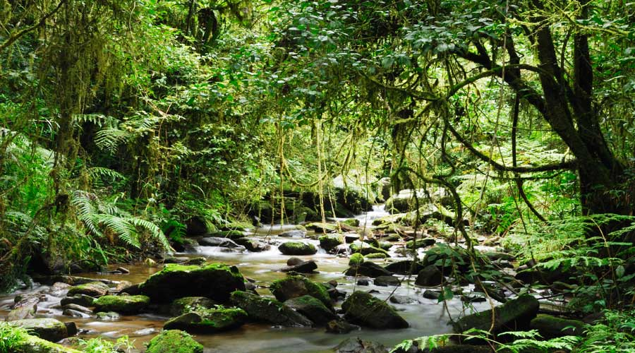 Drawn jungle madagascar Land South West Nature of