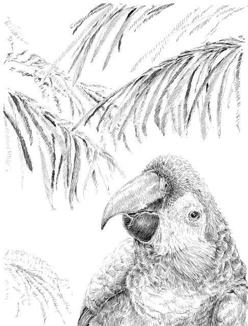 Drawn rainforest pen and ink Bird decor decor drawing art