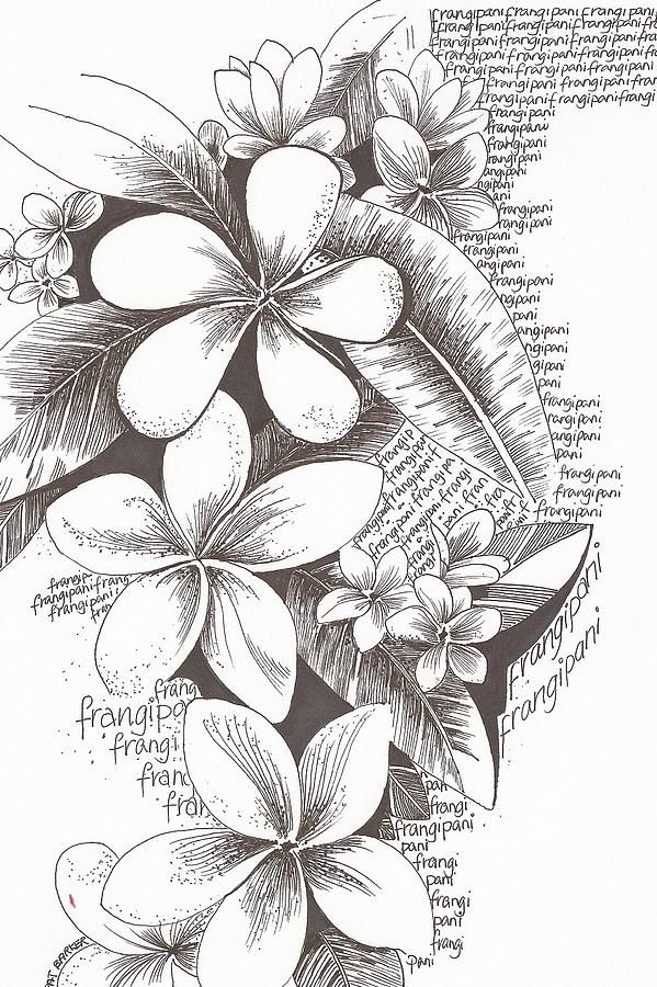 Drawn rainforest plumeria tree 25+ on this on Find