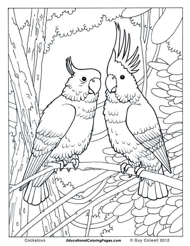 Drawn brds coloring page Ideas One coloring Birds pages