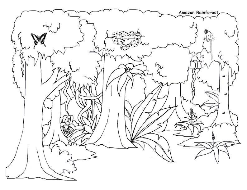 Drawn rainforest jungle Coloring jungle 2o  Pages