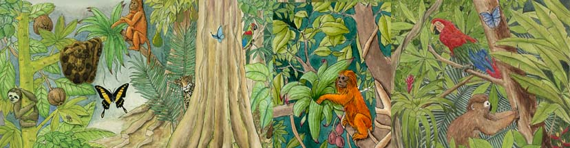 Drawn rainforest temperate rainforest About Rainforests Rainforests