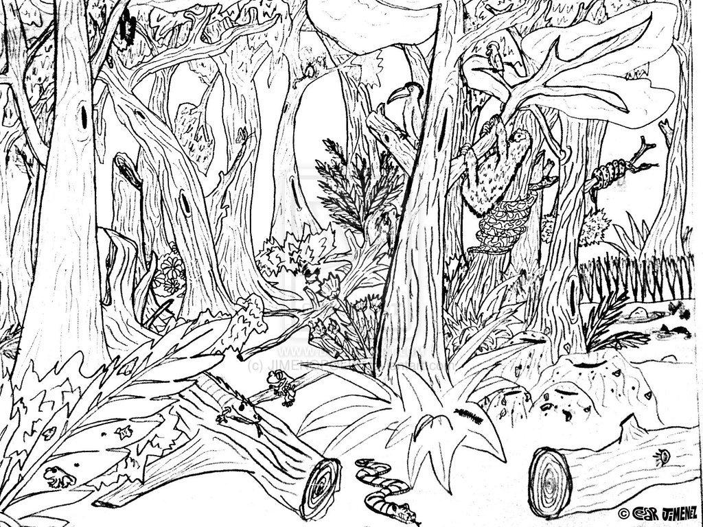 Drawn rainforest jungle scenery Page Scene Scene Scene Jungle