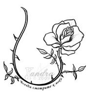 Drawn jungle rose vine Vine 2397 images Design Rose