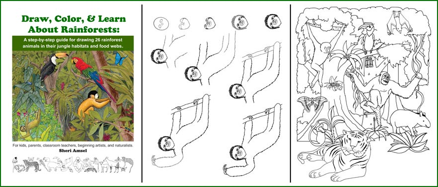 Drawn rainforest temperate rainforest Book Rainforests & of Learn
