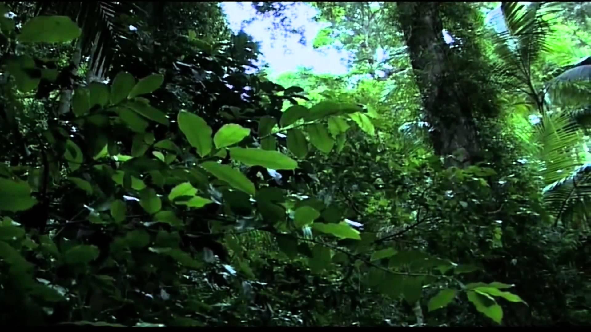 Drawn rainforest tropical rainforest biome Tropical Rainforest Biome YouTube Tropical