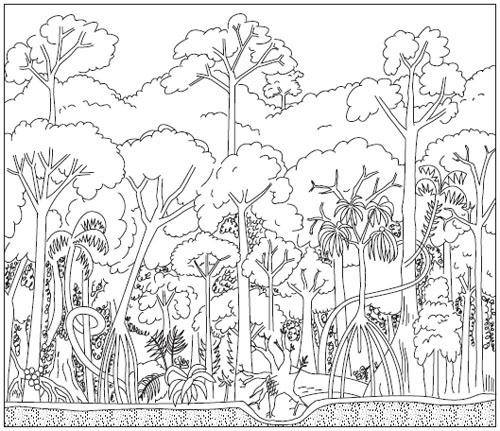 Drawn rainforest tropical forest 11 Individuals Rainforest 16 Structure